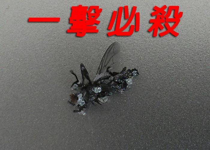 产品 或者 惊为天人 大开 哪些 原型机 历史 包括 兵器/苍蝇克星:盐巴散弹枪灭蝇小能手,威力奇大。
