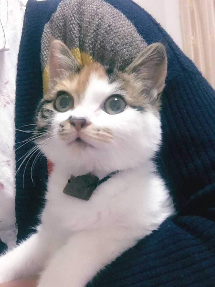壁纸 动物 狗 狗狗 猫 猫咪 小猫 桌面 720_960 竖版 竖屏 手机