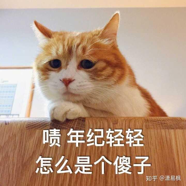 在微博收割表情包(ω)  铲屎官微博id著名网黄猫日 他还养了好几只猫图片