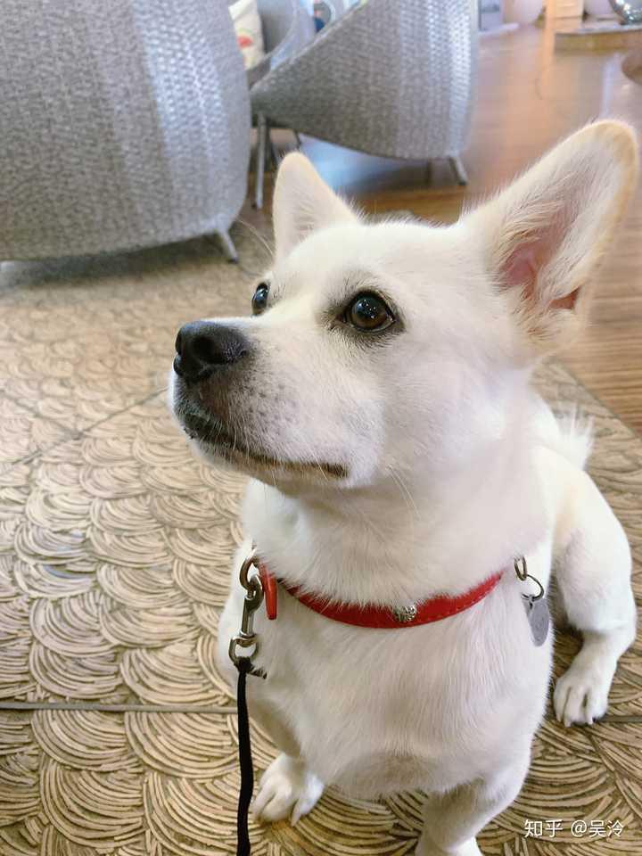 WWW_ABC628_COM_土狗当宠物狗没啥吧?