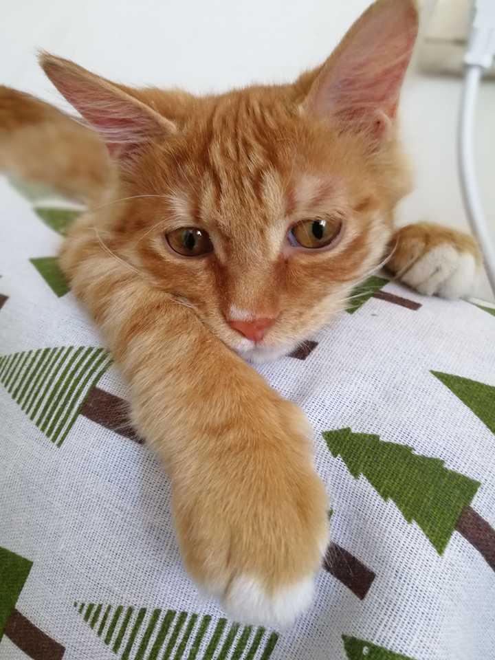 和猫睡在一个被窝,会有什么风险?