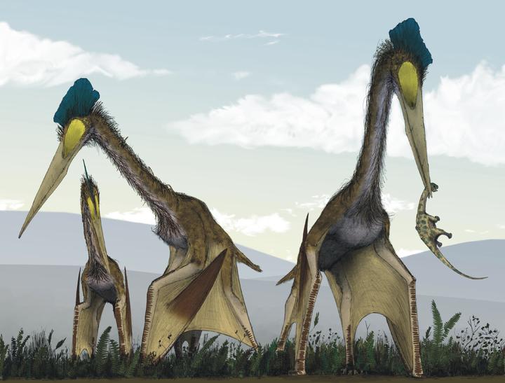 风神翼龙(quetzalcoatlus)