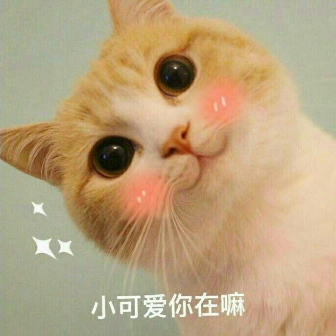 之前一直用这个猫咪做头像,我觉得很可爱呀,看着都超想跟自己聊天的.