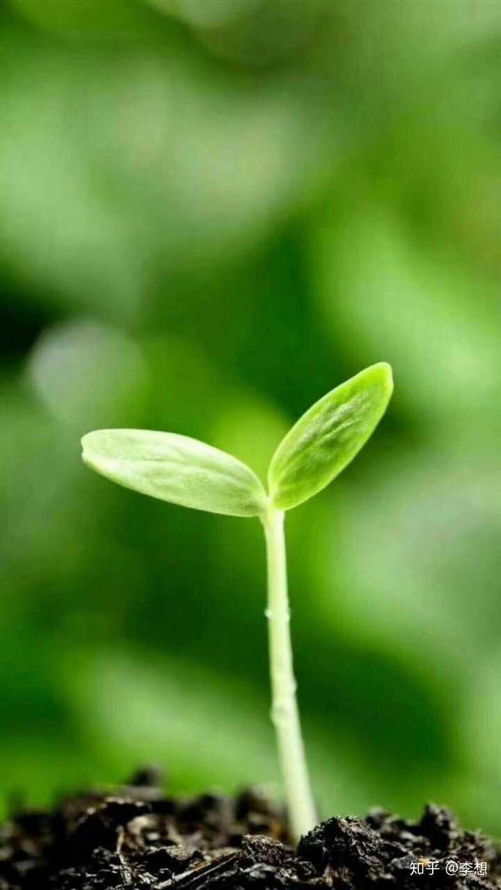 植物种子萌发的外部环境条件中,不一定需要的条件是(
