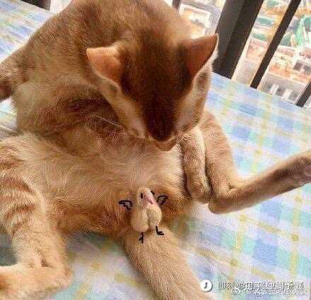 壁纸 动物 狗 狗狗 猫 猫咪 小猫 桌面 440_425