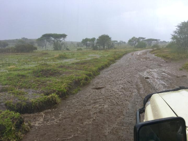 为什么非洲草原似乎都是黄色的?