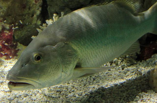 鱼会不会尿尿呢?