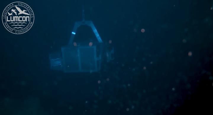 科学家在南海首次发现鲸落,鲸落是什么?具有怎样的价值?