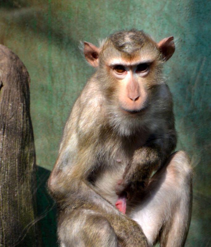杭州野生动物园一猴子在猴年第一天干啥呢?