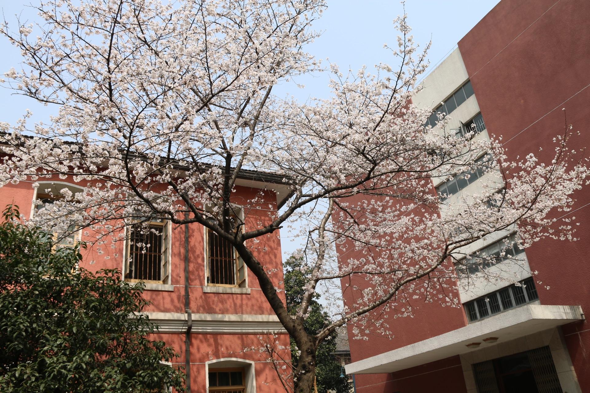 在浙江省杭州高级中学留级是一番的体验?初二高中考吗恋爱能图片