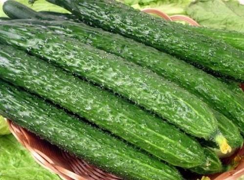 广东人所说的黄瓜和青瓜其实是两种不同的种类,黄瓜比较大,偏短,成熟