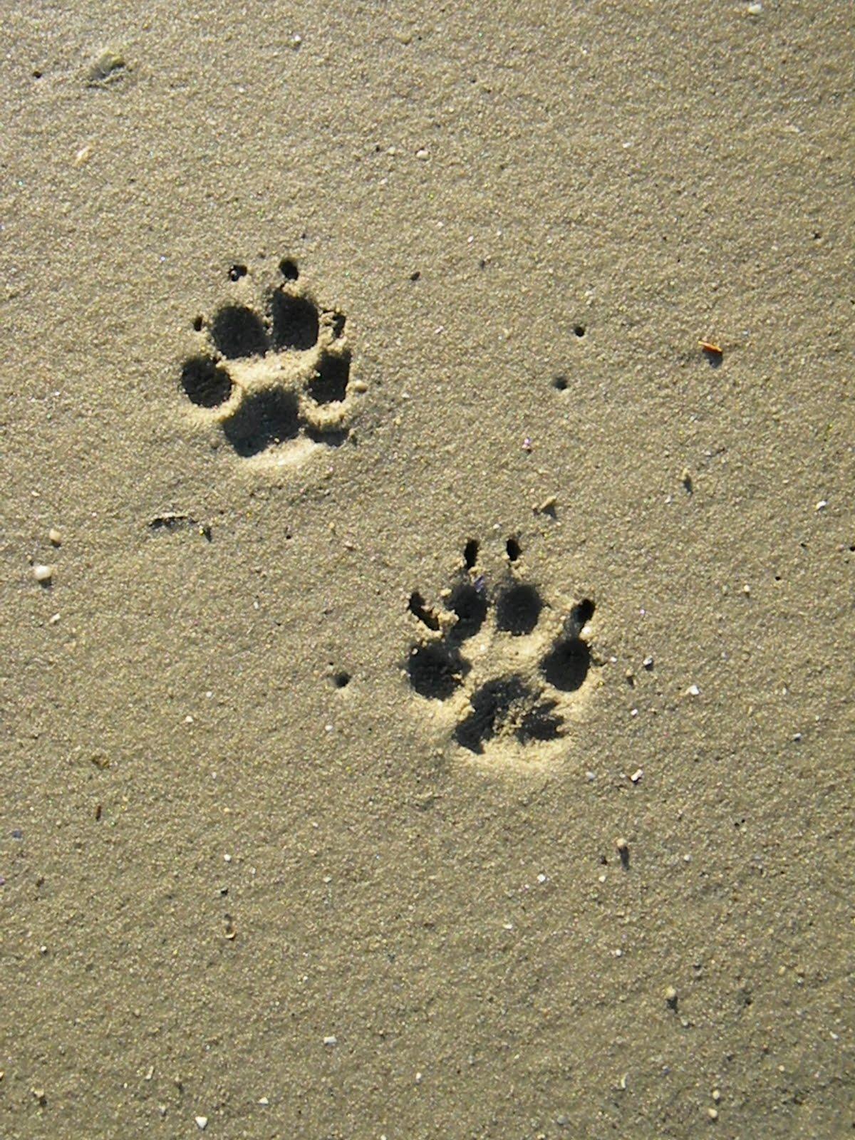 猫爪印与狗爪印区别在哪儿?