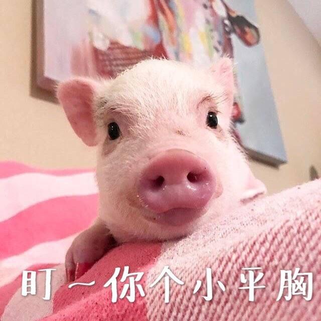 有哪些猪的搞笑图片或者表情?信表情包微到动态怎么添加过大图图片