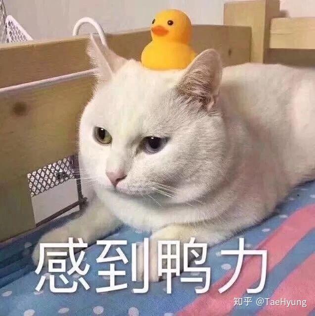 如何看待鸭子类表情包的爆红?图片