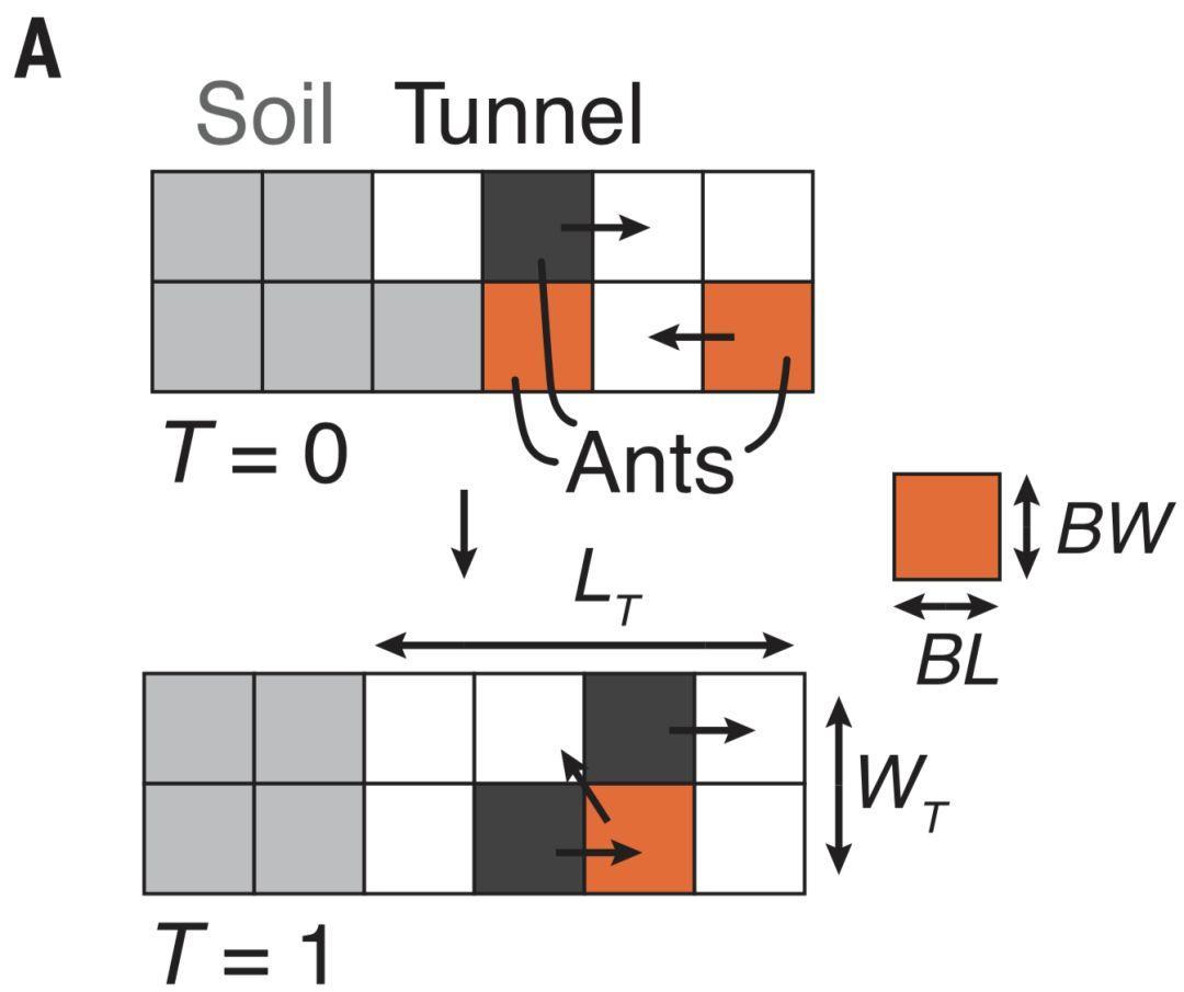 蚂蚁结构示意图