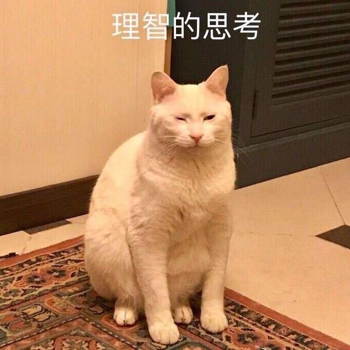 壁纸 动物 狗 狗狗 猫 猫咪 小猫 桌面 600_600