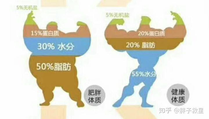 减肥和减脂有实质性区别?男生快速瘦肚子图片