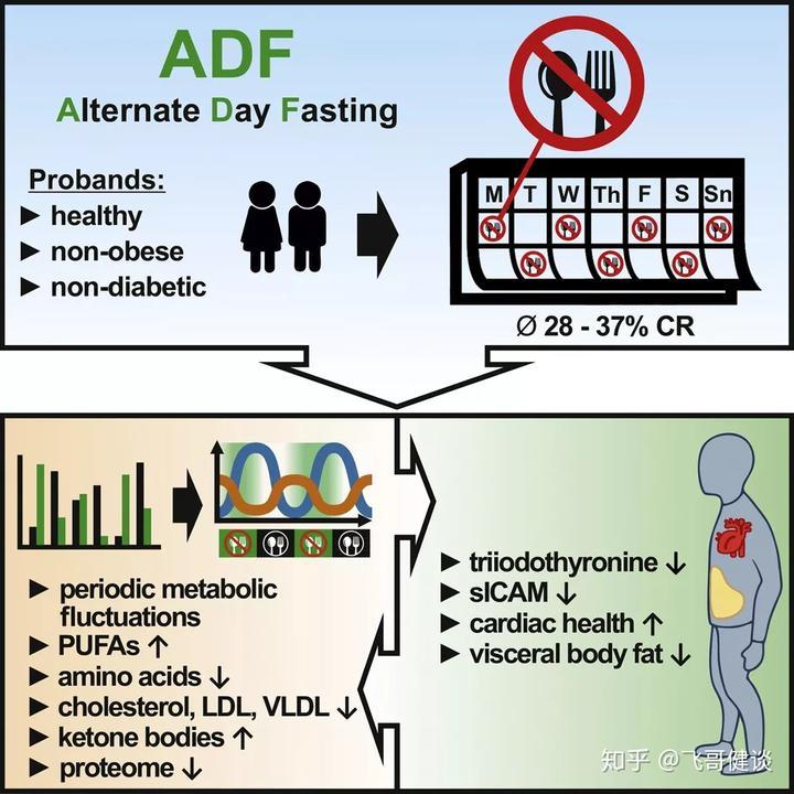 隔天断食减脂有奇效?卡路里减肥多少可以消耗跑步图片