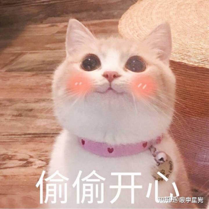 有哪些好看的[猫咪动图]表情包?图片