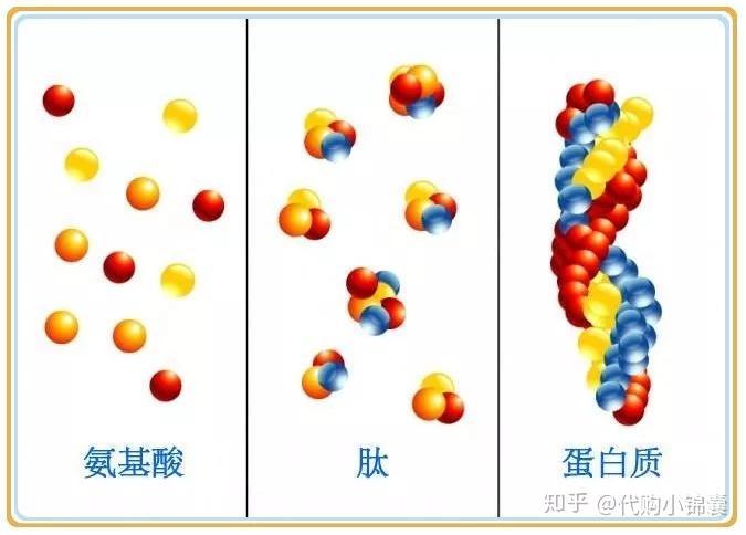 甘氨酸的结构