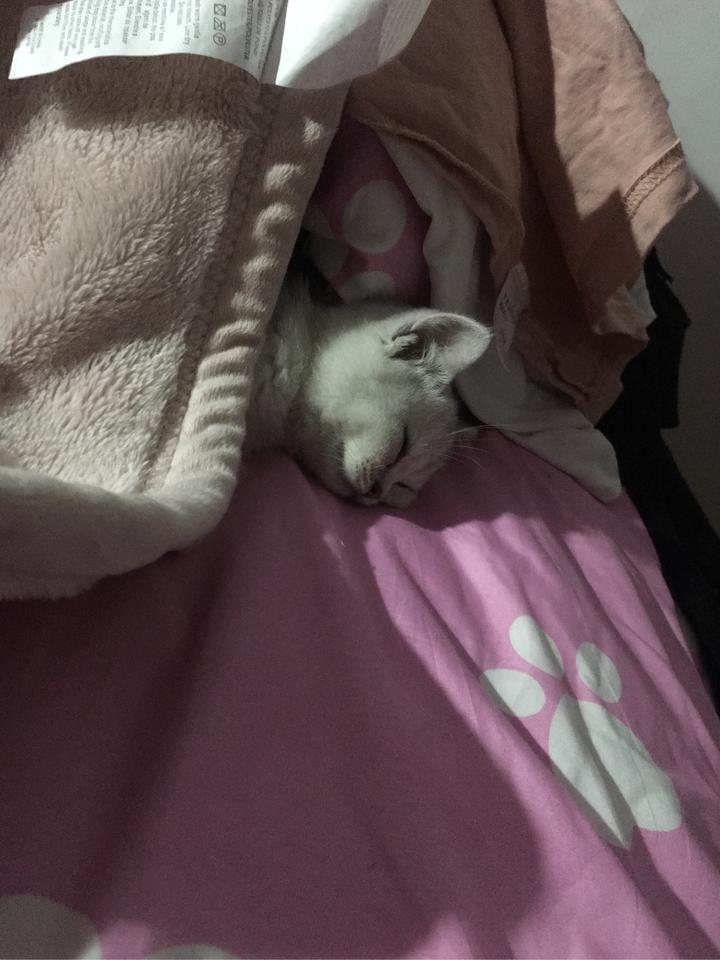 开始它睡在床尾 一睁眼看见毛绒绒的小脑袋超级幸福.