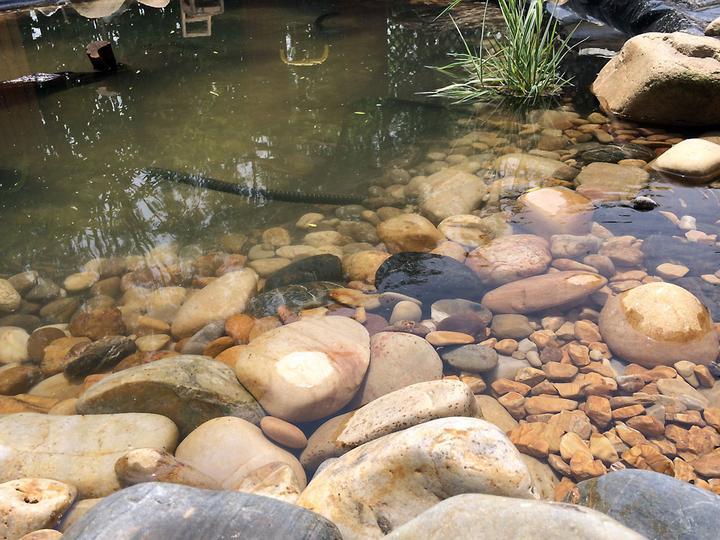 庭院建造池塘的造景过程【转自weibo:@马锐拉】插图(28)