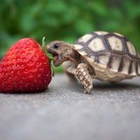 阿喀琉斯与乌龟