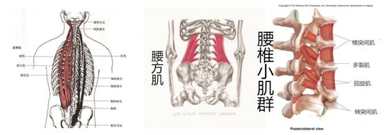 竖脊肌_腰肌劳损正确的康复方法是什么?