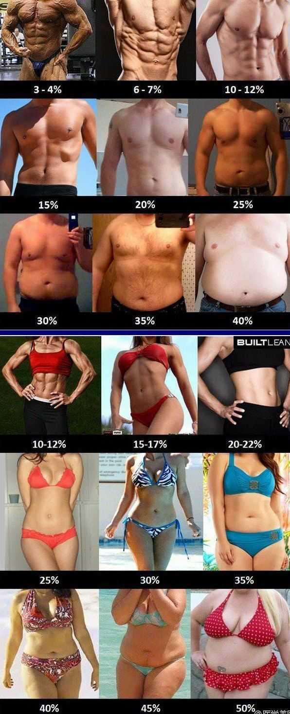 脂肪 29 体 率