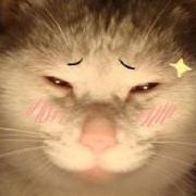 红茶魔术猫