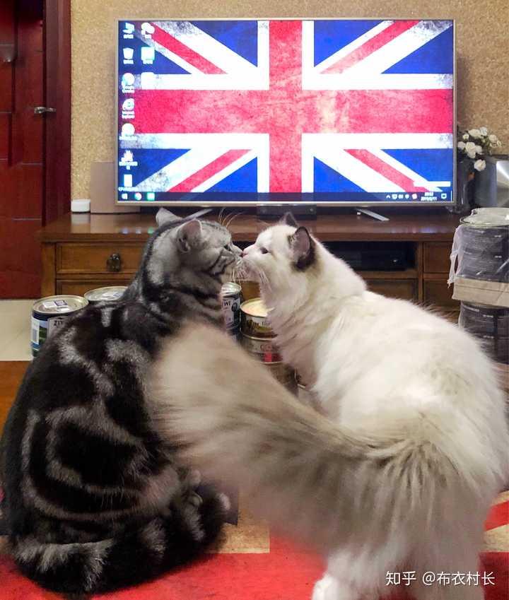 猫 茶白 性格