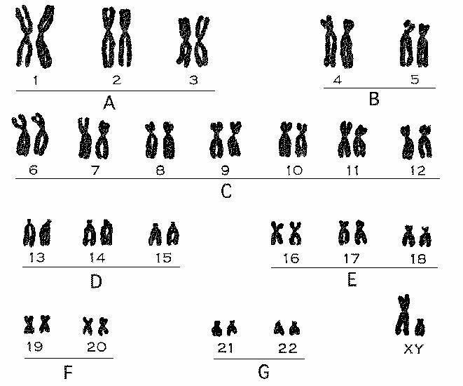 期��.�:(X��y_人身体中的x和y性染色体是否有同源染色体?