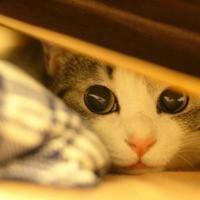 关于养猫你需要知道的