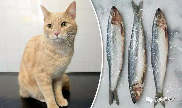 猫真的天生爱吃鱼吗?真相来了(图7)