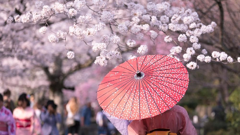 樱花日语怎么写?