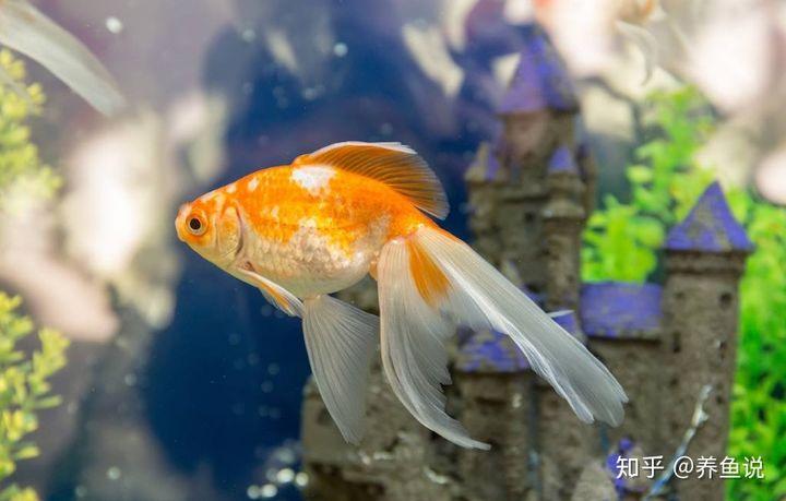 养鱼百家问题:观赏鱼会撑死吗?最长能耐饥饿多久不喂?看完就懂(图1)