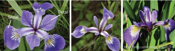 利用 TensorFlow机器学习手段对鸢尾花按照物种进行分类
