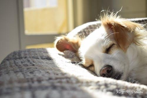 狗狗为什么老打瞌睡,它们做梦时会梦到主人吗?(图3)