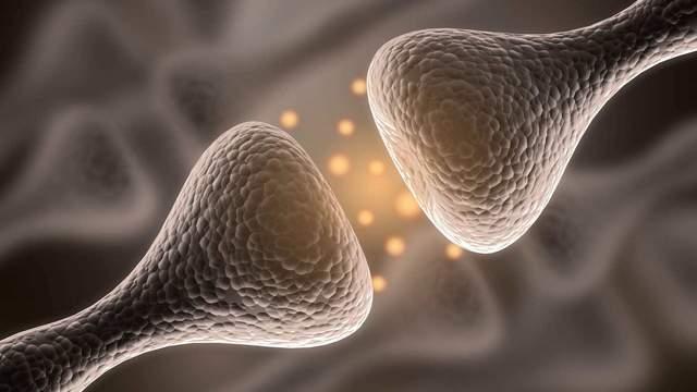 很多生物学家认为,这种现象是对生物延续大有裨益的