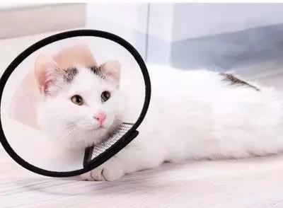 猫咪突然一只眼睛发红睁不开?警惕角膜炎5种常见症状(图6)