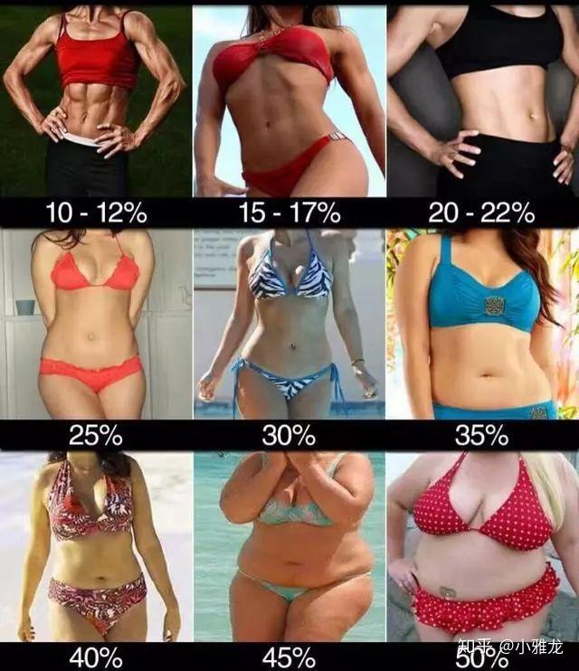 率 女性 脂肪 体 25