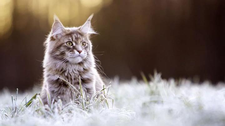 十二星座适合养什么猫?天蝎座竟然最适合养这种!