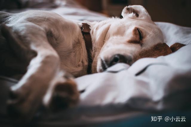 狗狗为什么老打瞌睡,它们做梦时会梦到主人吗?(图2)