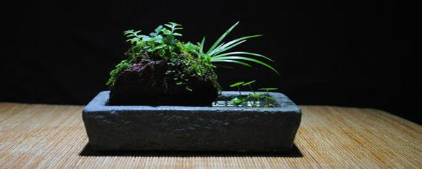 上水石上栽什么植物好(吸水石上种什么植物)插图