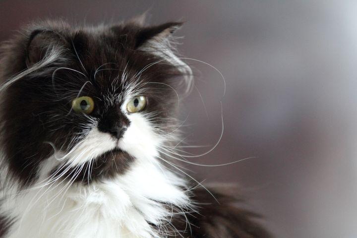 非 再生 性 貧血 猫