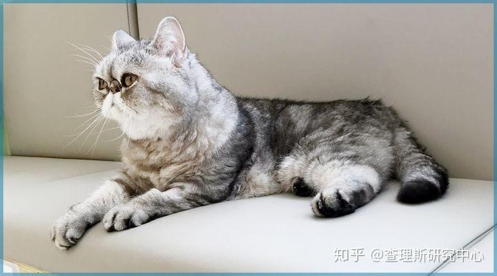 猫咪角膜腐骨(坏死性角膜炎)是什么病?怎么治疗啊?(图11)