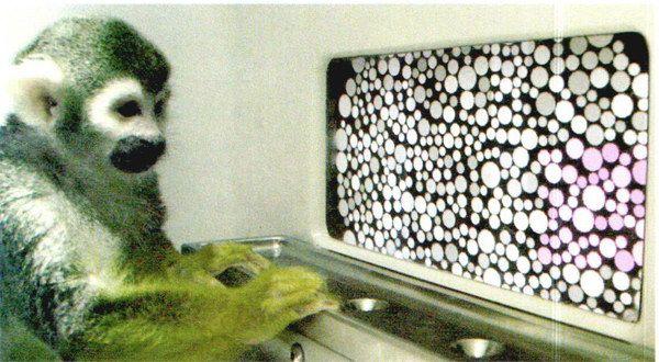经过基因治疗的松鼠猴能够分辨出其原本看不见的红色。