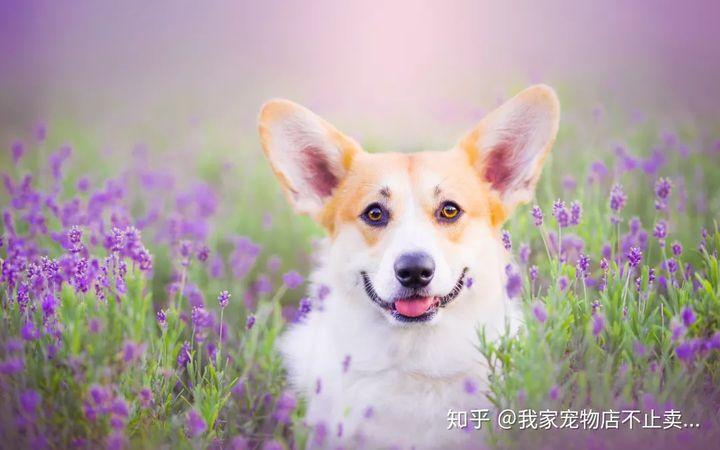 狗是色盲吗 它的视力如何呢?(图5)
