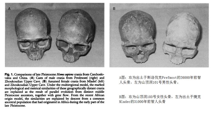 典型蒙古人种的形成与史前扩张 1 -  - 宋丽娟的博客