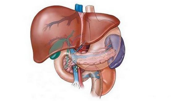 肝细胞癌的基因突变和靶向药物